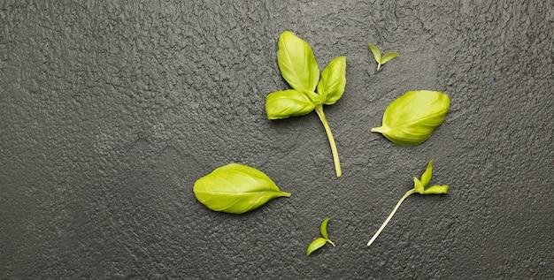 Свежее растение базилика на темном фоне, вид сверху, плоская планировка, концепция сбора урожая, здоровая пищевая композиция