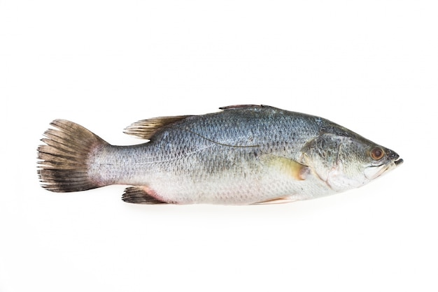 Fresh bass with white background