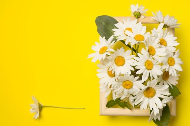 Свежие красивые цветы ромашки между рамой