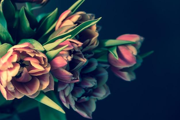 Fresh beautiful pink purple tulips bouquet on dark background.