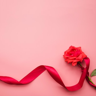 Fresh beautiful rose tied with red satin ribbon on pink background