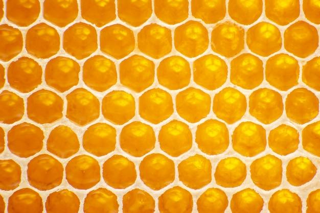빛 클로즈업에 벌집에 신선한 꿀벌 꿀. 비타민 천연 식품. 질감과 배경