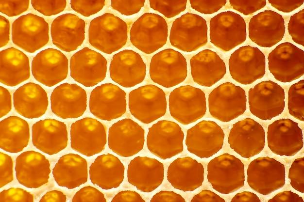 빛 클로즈업에 벌집에 신선한 꿀벌 꿀. 비타민 자연 식품.