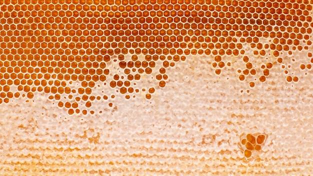 ライトのクローズアップでハニカムの新鮮なミツバチの蜂蜜
