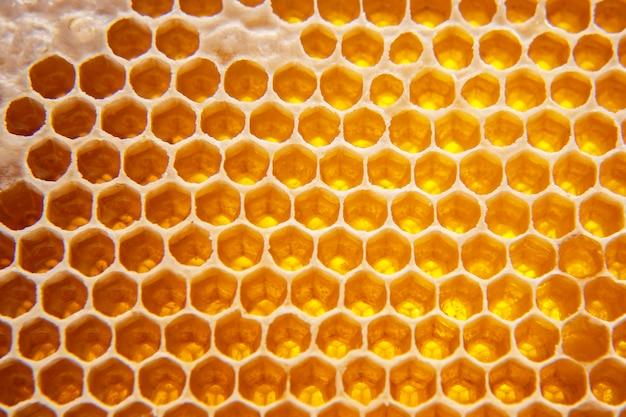 빗에 신선한 꿀벌 꿀입니다. 자연 식품 배경 질감