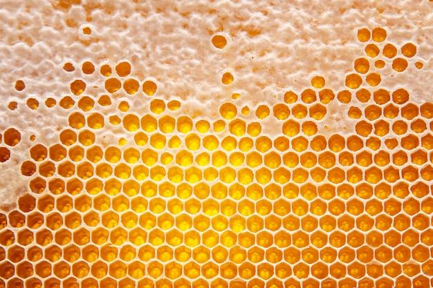 빗에 신선한 꿀벌 꿀. 자연 식품 배경 텍스처