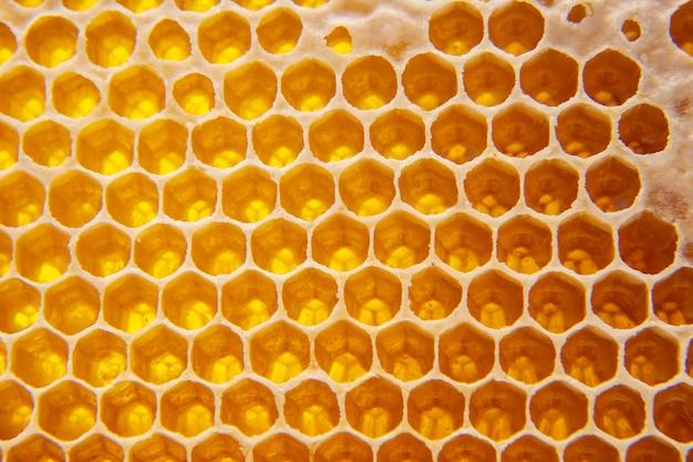 빗에 신선한 꿀벌 꿀