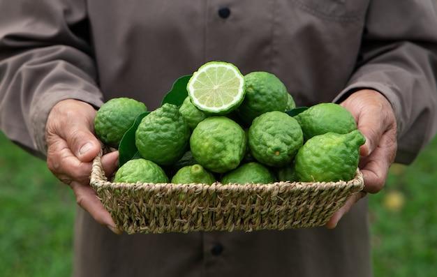 Fresh bergamot fruit in a basket holding by woman hand