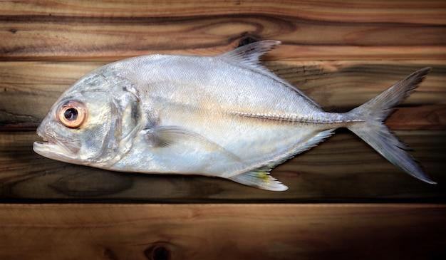Fresh bigeye trevally fish.