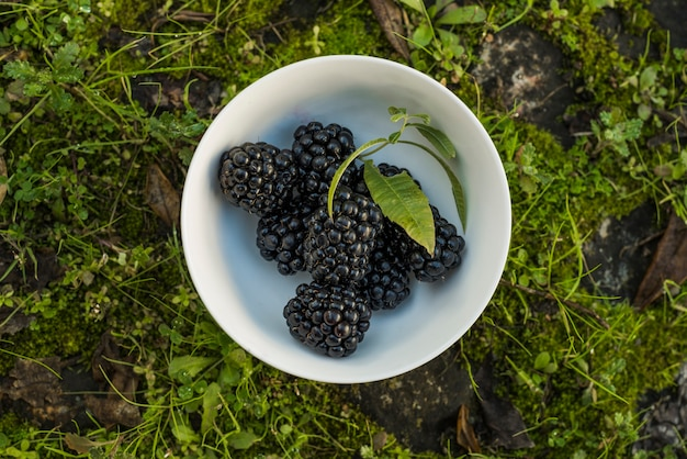 Fresh blackberries on bowl on grass