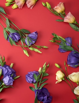 Fresh blooming flowers eustoma lisianthus on red paper background