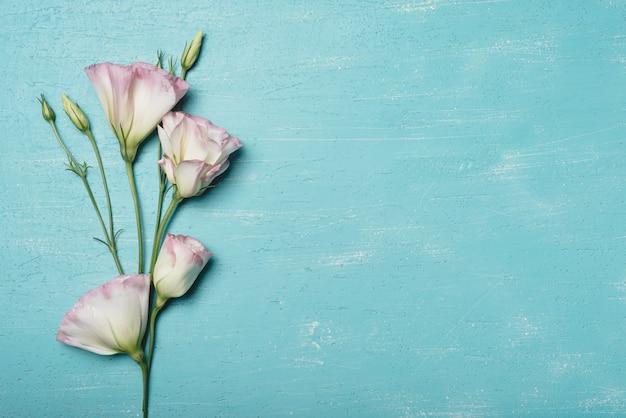 Fresh blossom eustoma flowers on blue textured background