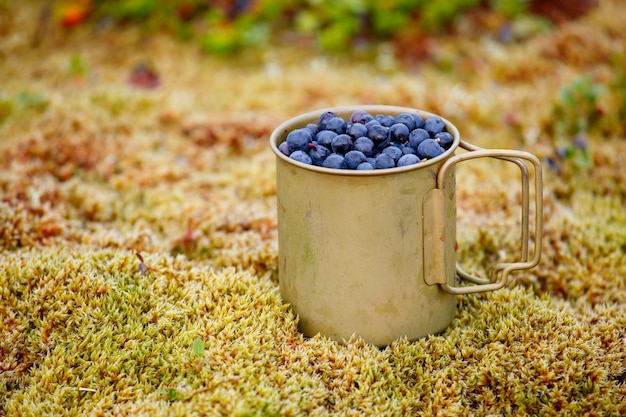 Fresh blueberries in metal cup on the ground in forest