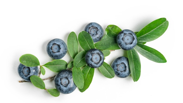 Fresh blueberry and leaves on white table