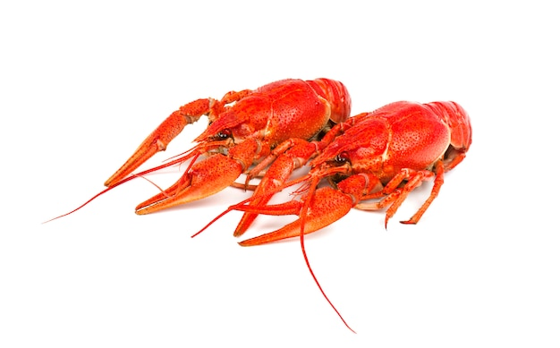 Fresh boiled red crayfish isolated on white. top view