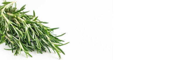 Fresh bouquet of rosemary leaves in a white ceramic bowl on white light surface
