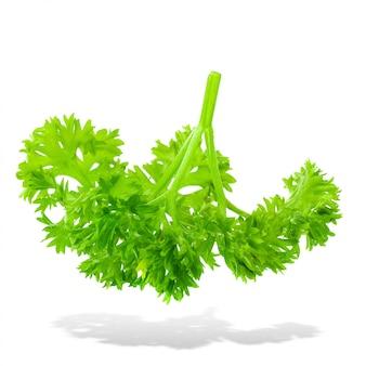 Свежая ветвь зеленой петрушки натуральные продукты питания, изолированных на белом фоне