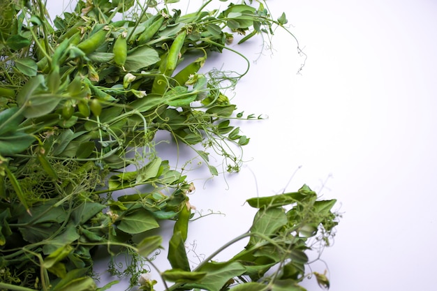 Fresh bright green pea pods on pea plants on a white background