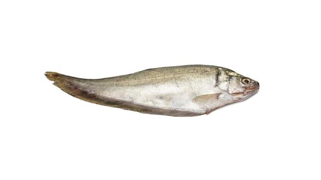 신선한 청동 featherback 강 물고기는 격리 된 흰색 배경에 닫습니다
