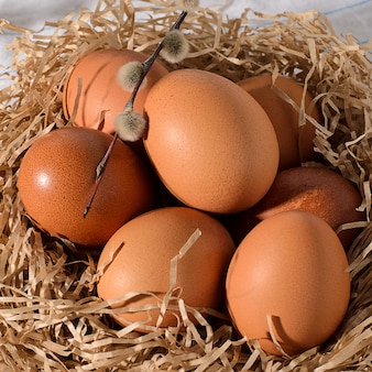둥지에 소박한, 나무, 검은 색, 어두운 배경에 신선한 갈색 계란.