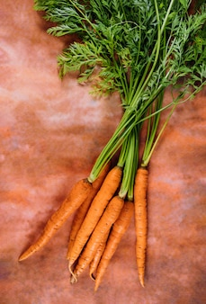 Fresh bunch of carrots with green stems.