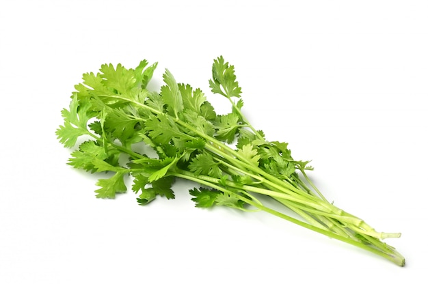 Fresh bunch of coriander leaves isolated on white surface