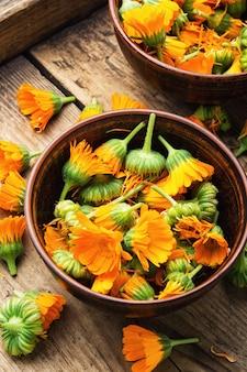 Fresh calendula flowers in herbal medicine.marigold,healing herbs on rustic wooden background