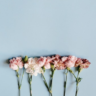 파란색 배경으로 배열하는 신선한 카네이션 꽃