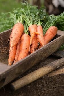 Fresh  carrots picked from the garden. vegetables harvest.