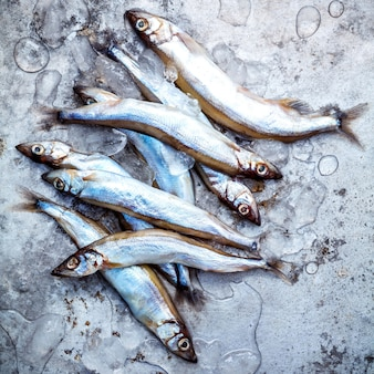 Fresh catch Shishamo fish fully eggs flat lay on shabby metal background.