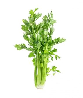 Fresh celery isolated