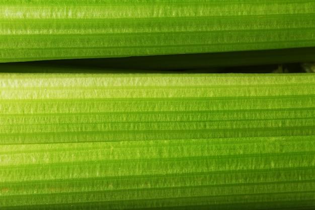 新鮮なセロリの茎のクローズアップ