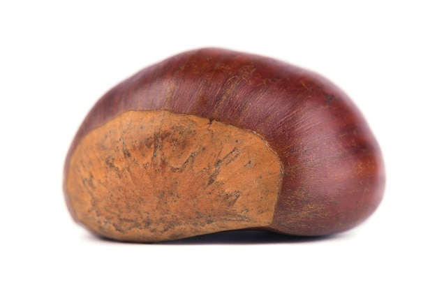 Fresh chestnuts isolated on white space. hippocastanum isolated. chestnut with clipping path. macro