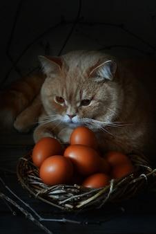 新鮮な鶏の卵。鶏の卵が入った籐のバスケット。イースターエッグ。赤毛の猫。