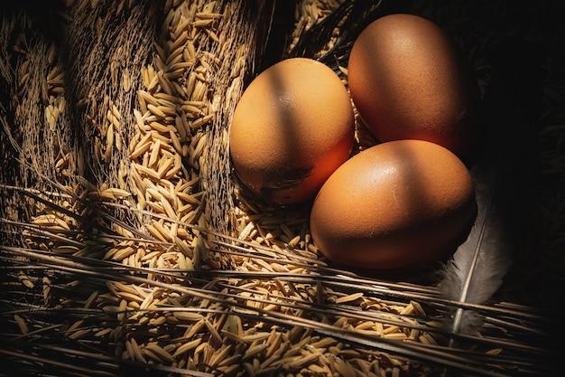 農場の鶏舎にある新鮮な鶏の卵と干し草の巣。