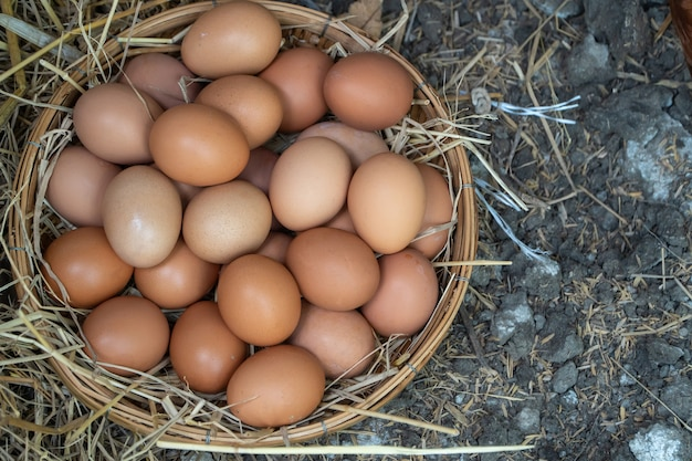 Fresh chicken eggs in the basket on the ground after farmers collect eggs from the farm