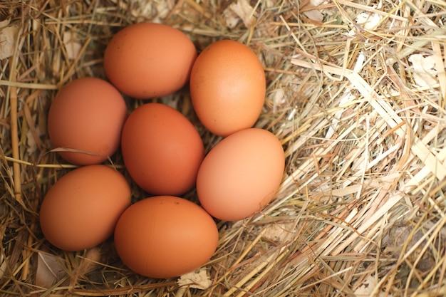 新鮮な鶏の卵は、干し草のコンセプトの農業食品と天然物の鶏舎にあります