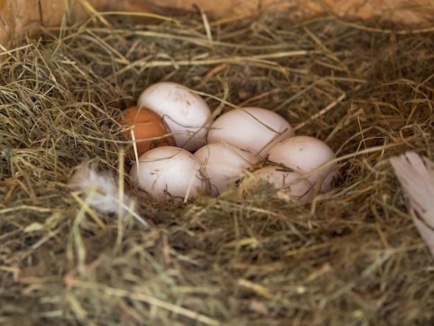 Fresh chicken eggs in the nest, farm theme