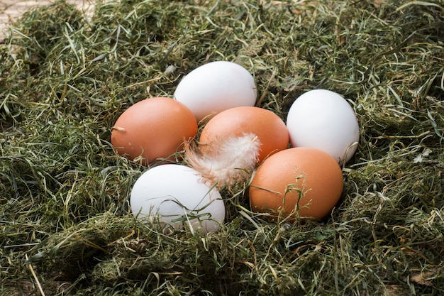 Fresh chicken eggs on straw on the farm. rustic style.