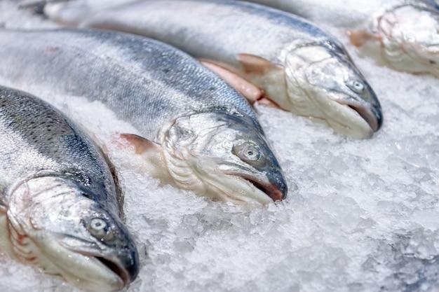 Свежий охлажденный лосось в целых тушах лежит на ледяной крошке