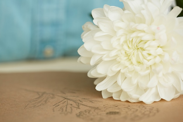 Fresh chrysanthemum on table