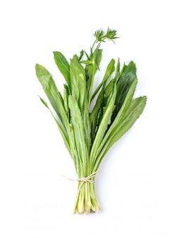 Fresh cilantro isolated
