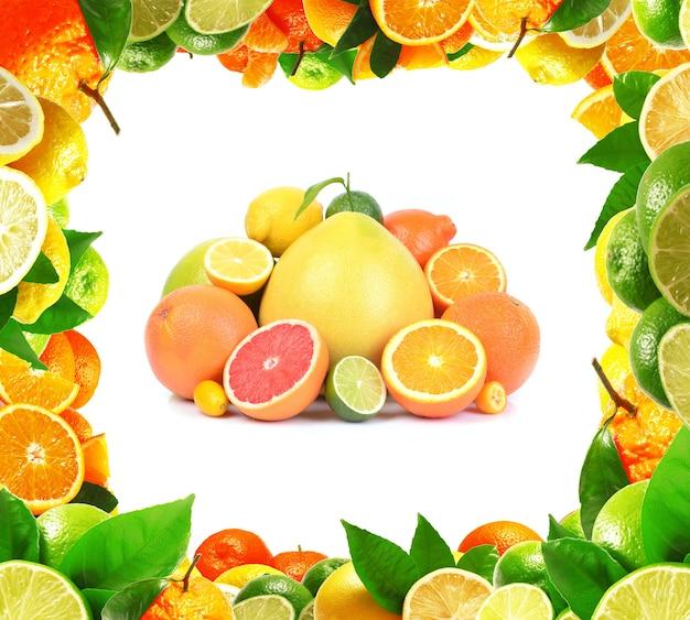신선한 감귤류 과일