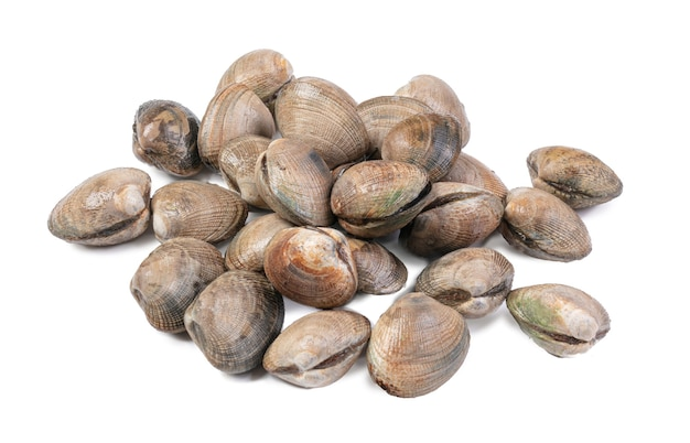 Fresh clams on white surface