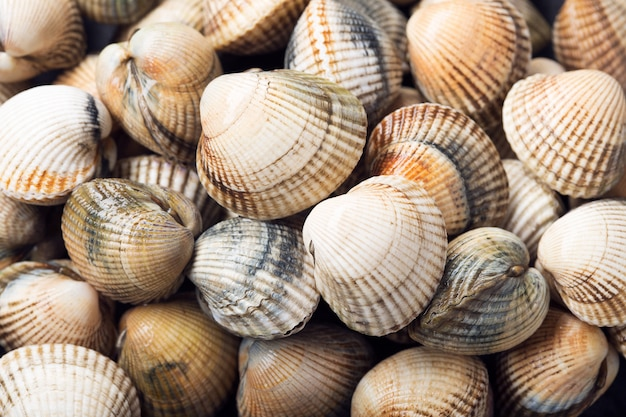 Fresh cockles background. shell texture background. cerastoderma edule