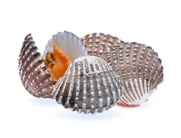 Свежие морепродукты моллюсков, изолированные на белом.