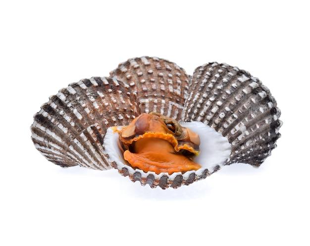 Свежие морепродукты моллюсков на белом фоне