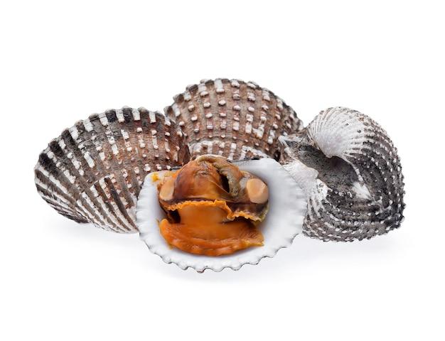 Свежие морепродукты моллюсков на белом