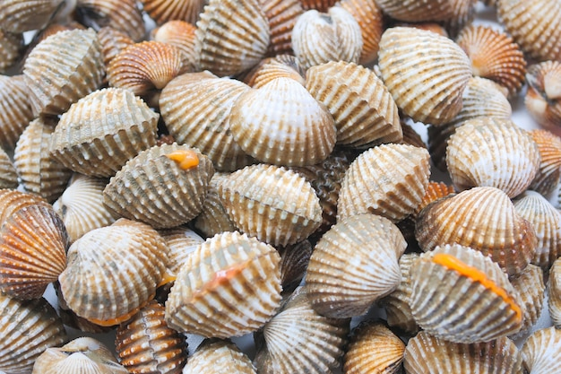 Fresh cockles seafood