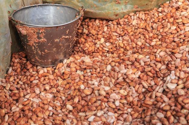 新鮮なカカオ豆と新鮮なカカオの種をバケツに入れてチョコレートを作る